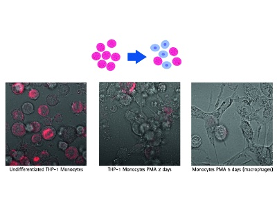 Screening Live Cells Using RNA Detection Probes