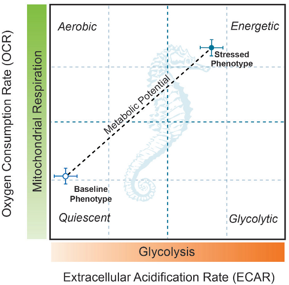 Stress Test Application: Examining The Multiple Parameters Of Glycolytic Activity