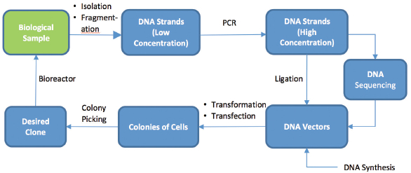 automated molecular biology american laboratory