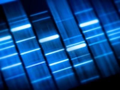 Rapid Genetic Identification of Meat