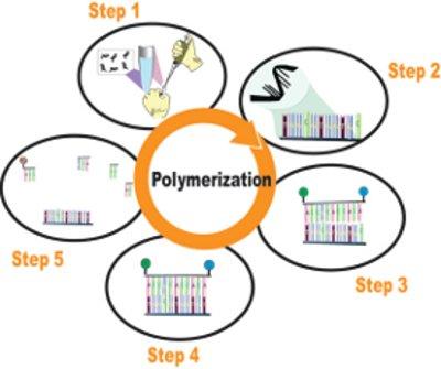 Mold-Specific Quantitative PCR: The Emerging Standard in Mold ...